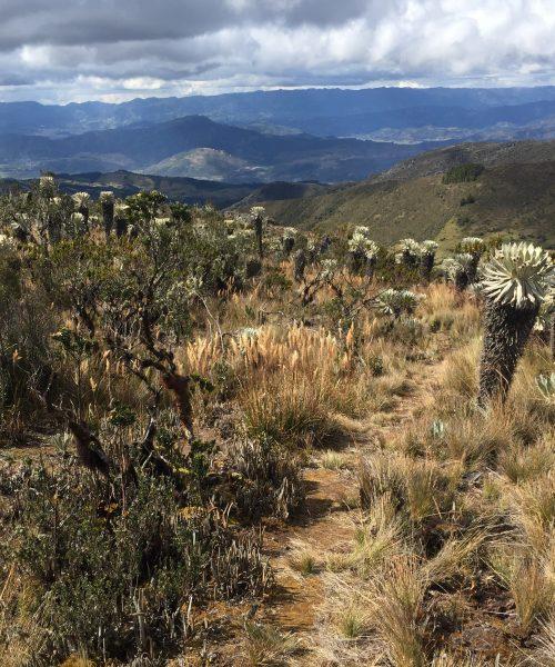 Páramo de Oceta, Monguí